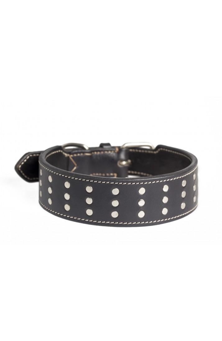 collar perro